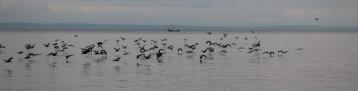 Cormorants on the lake