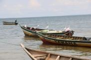 Igombe Egrets