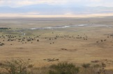 Day 2 Ngorogoro (442)