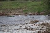 Hippos and Crocs