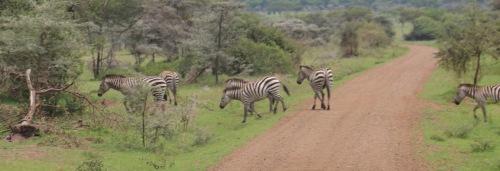 Day 1 Serengeti (118).JPG