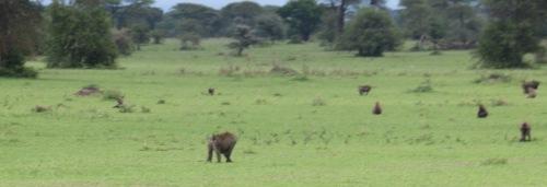 Day 1 Serengeti (163)-9.jpg