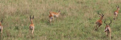 Day 1 Serengeti (258).JPG