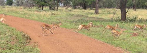 Day 1 Serengeti (281)-19.jpg