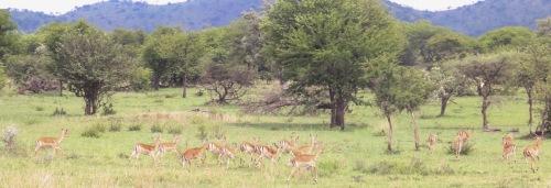 Day 1 Serengeti (289)-27.jpg