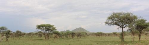 Day 1 Serengeti (319)-7.jpg