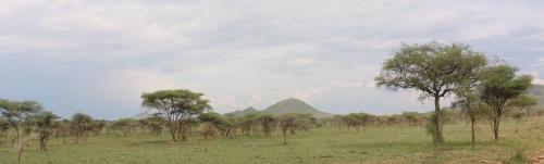 Day 1 Serengeti (319).JPG