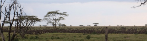 Day 1 Serengeti (538)-90.jpg