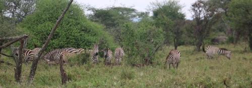 Day 2 Serengeti (112).JPG