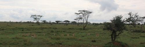 Day 2 Serengeti (153).JPG