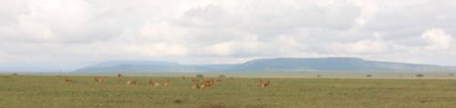 Day 2 Serengeti (204)-10.jpg