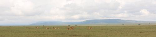 Day 2 Serengeti (204).JPG