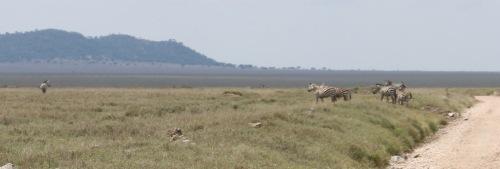Day 2 Serengeti (296)-9.jpg