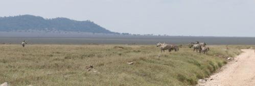 Day 2 Serengeti (296).JPG