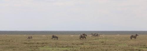 Day 2 Serengeti (297)-10.jpg