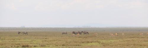 Day 2 Serengeti (304).JPG