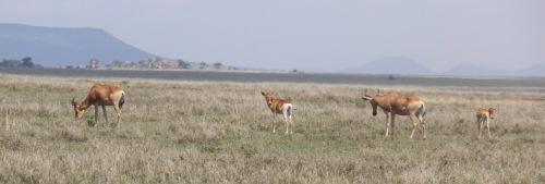 Day 3 Serengeti  (110).JPG