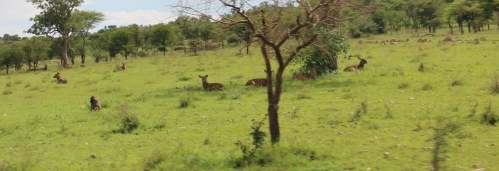 Day 3 Serengeti  (428).JPG