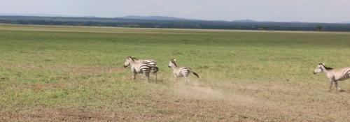 Day 3 Serengeti  (475).JPG