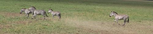 Day 3 Serengeti  (476).JPG