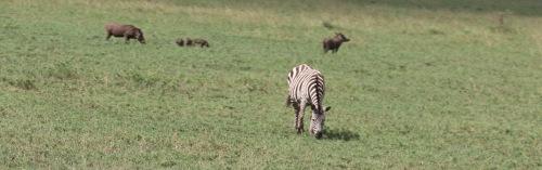 Day 3 Serengeti  (478).JPG
