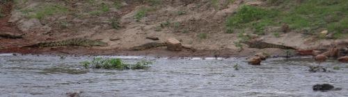 Day 3 Serengeti  (504).JPG