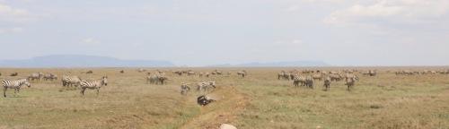 Day 3 Serengeti  (89).JPG