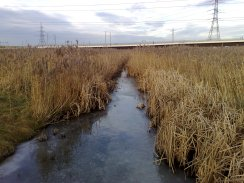 2009 Rainham Marshes