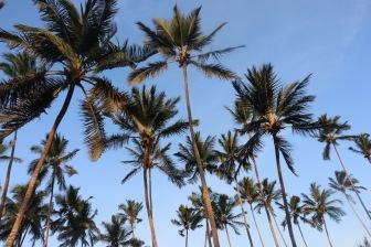 Zanzibar (98)