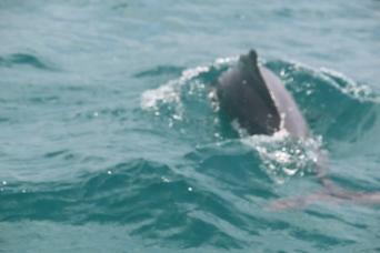 Zanzibar-Dolphin