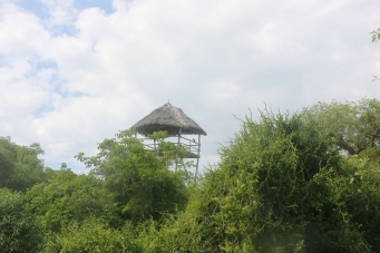 Zanzibar (1161)