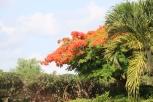 Zanzibar (447)