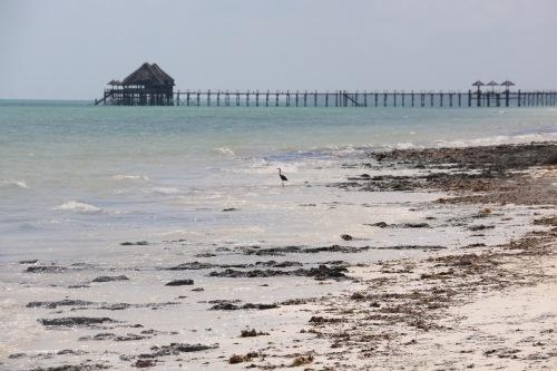 Zanzibar (464)