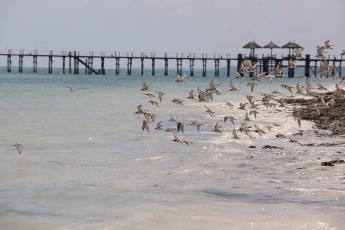 Zanzibar (504)