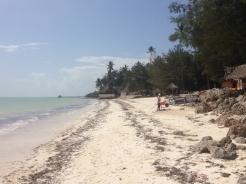 Zanzibar (615)-547