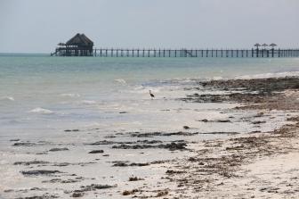 Zanzibar (623)-555