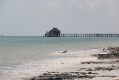Zanzibar (624)-556