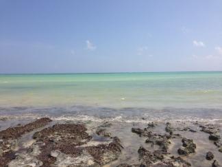 Zanzibar (632)-564