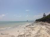 Zanzibar (633)-565