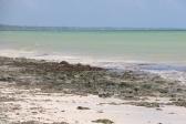 Zanzibar (641)-573