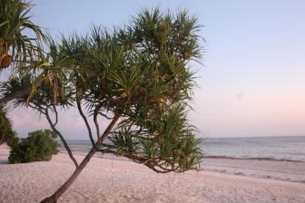 Zanzibar (681)