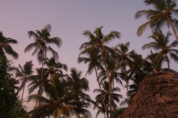 Zanzibar (687)