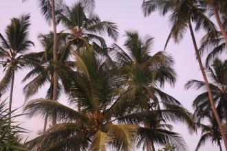 Zanzibar (689)