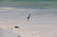 Zanzibar (772)-704