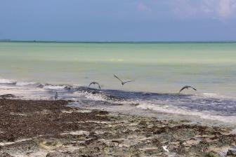 Zanzibar (779)-712