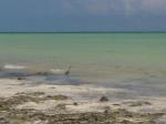 Zanzibar (787)-720