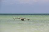 Zanzibar (792)-725