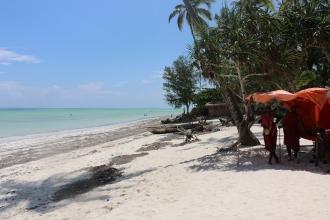 Zanzibar (795)-728