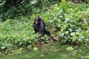 10 Entebbe Zoo (226)