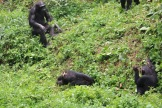 10 Entebbe Zoo (229)